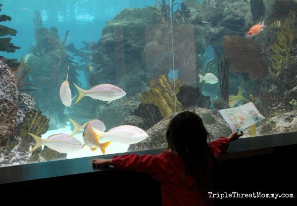 New York Aquarium Celebrates World Oceans Day | TripleThreatMommy.com